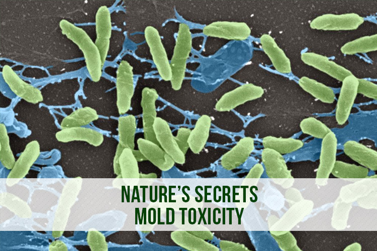 Nature's Secrets - Mold Toxicity