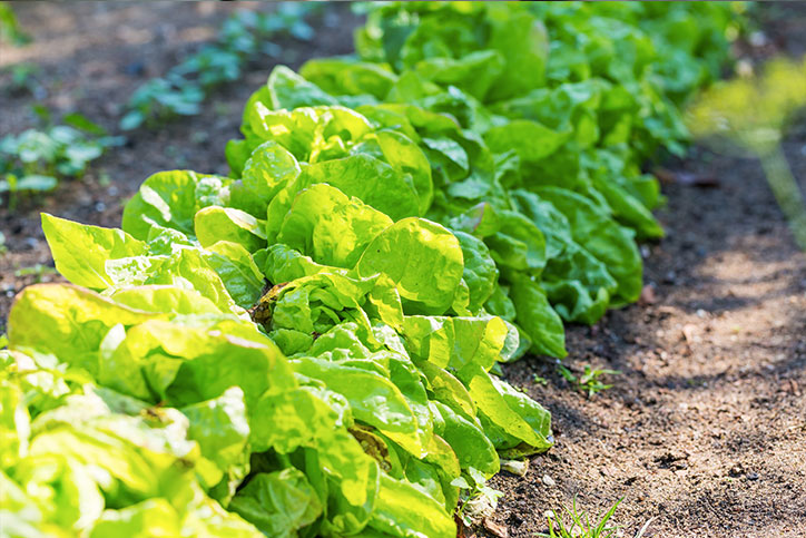 healthy-garden
